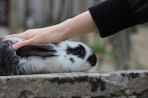 cosmeticele netestate pe animale