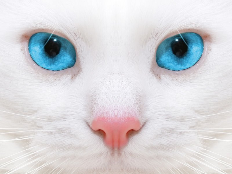 de ce sa sterilizezi pisica